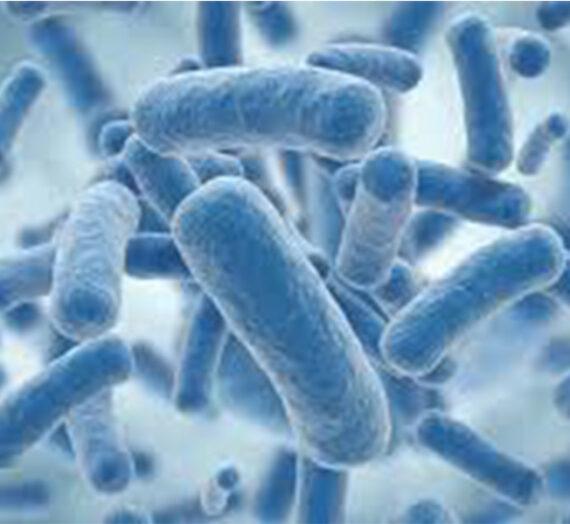 Un Probiotico al giorno toglie il medico di torno